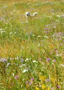 guswildflowers