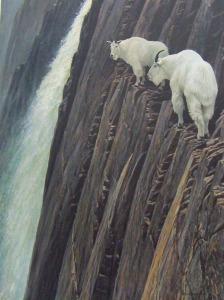 bateman goats